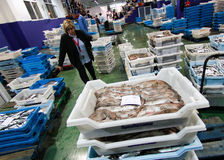 Woman on fish market. An authorized buyer walks between fish boxes inside a fish market in the Spanish island of Mallorca Stock Photos