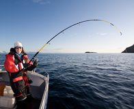 Woman fishing. Of the boat on the sea in Norway. Reeling up a big fish stock photo