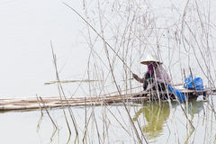 A woman is fishining in the river. A woman use bamboo fishing rod is fishining in the river,Thailand Stock Images