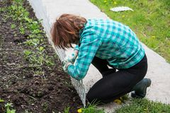 Woman fixing a decorative fence on a flowe bed. Woman fixing a decorative fence on a flower bed Royalty Free Stock Photo