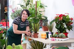 Portrait of woman florist in apron and tool in flower shop stock photography