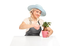 Woman florist cutting a bonsai tree Stock Image