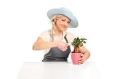Woman florist cutting a bonsai tree Stock Image