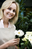 Woman florist or gardener holding some white flowers Royalty Free Stock Photos