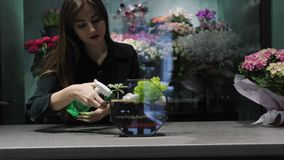 Woman florist sprays with water plants in florarium. Professional florist takes care of plants in florarium stock video
