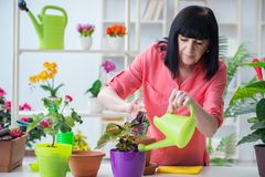 The woman florist working in the flower shop Stock Images