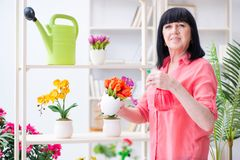The woman florist working in the flower shop Royalty Free Stock Photography