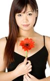 Woman And Flower. An attractive young Asian woman in white top holding a red flower on white background Royalty Free Stock Photos