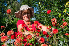 Woman in flower garden Stock Images
