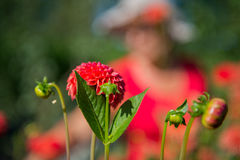 Woman in flower garden Royalty Free Stock Photo
