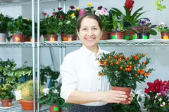 Woman in flower shop  with Calamondin Royalty Free Stock Photo