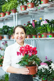 Woman in flower shop with Cyclamen Royalty Free Stock Photos