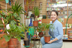 Woman in flower store. Woman with Nolina plant in flower store Stock Image