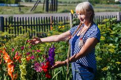 The woman in the flowered garden stock photo
