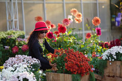 Woman and flowers. Woman enjoy playing with colorful flowers in the garden royalty free stock images