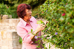 Woman with flowers in her garden Stock Photo