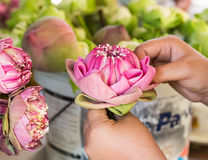 Woman folding petal pink lotus for pray Buddha in thai Royalty Free Stock Images