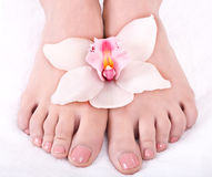 Woman foot with flower lily. Royalty Free Stock Photography