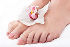 Woman foot with flower lily. Stock Images