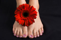 Woman foot with red gerbera stock images
