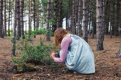Woman foraging in forest Stock Images