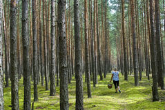 Woman in the forest. Woman with basket picking up mashrooms in the wood Stock Photo