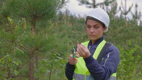 Woman forester take sample of new pine