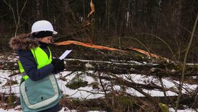 Woman forestry employee writing near destroyed trees. Woman forestry employee writing near destroyed tree in forest stock footage