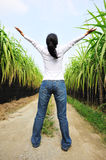 Woman free in sugarcane field Stock Photo