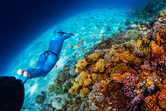 Woman freediver glides over vivid coral reef. In a crystal clear tropical sea Royalty Free Stock Photography