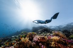 Woman freediver. Woman free diver glides in monofin in the depth over the colorful coral reef stock photography