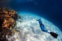 Woman freediver. In monofin glides in the sea over the sandy bottom and looks at the colorful coral reef royalty free stock photos