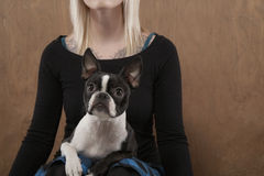 Woman With French Bulldog On Her Lap Stock Photos