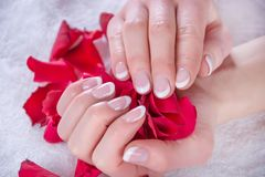 Woman with french nails polish manicure holding red rose petals in beauty salon. Girl with french nails polish manicure holding red rose petals in beauty salon royalty free stock image