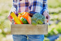 Woman with fresh organic vegetables from farm Stock Photography