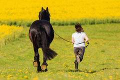 Woman with a Friesian horse on a field. Picture of a woman with a Friesian horse on a field royalty free stock image
