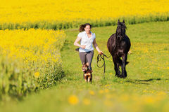 Woman with a Friesian horse on a field. Picture of a woman with a Friesian horse on a field stock photos