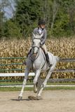 Woman gallops gelding around a corner at show stock photography