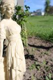 The woman in the garden stock photos
