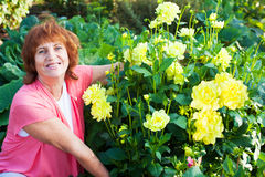 Woman in the garden cares for flowers Royalty Free Stock Photos