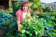 Woman in the garden cares for flowers Stock Photography