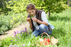 Woman in garden collecting fresh vegetables Stock Image