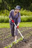 Woman at garden stock image