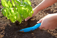 Woman with garden shovel Stock Images