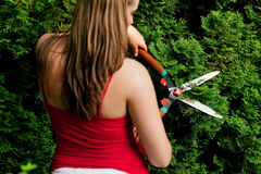 Woman in garden trimming hedge Stock Photos
