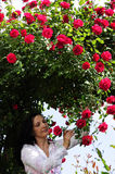 Woman in garden under red roses bower Royalty Free Stock Images