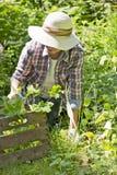 Woman in the garden Royalty Free Stock Photos
