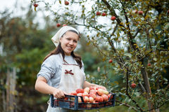 Woman in garden Royalty Free Stock Photography