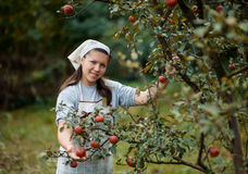 Woman in garden Stock Photos