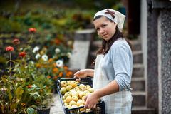 Woman in garden Royalty Free Stock Photo
